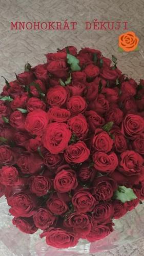 růže děkuji